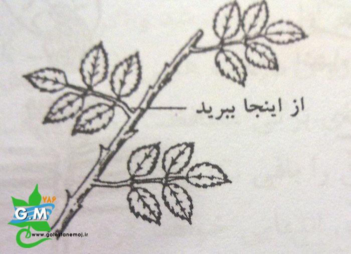 اصول تربیت و هرس گیاهان باغبانی